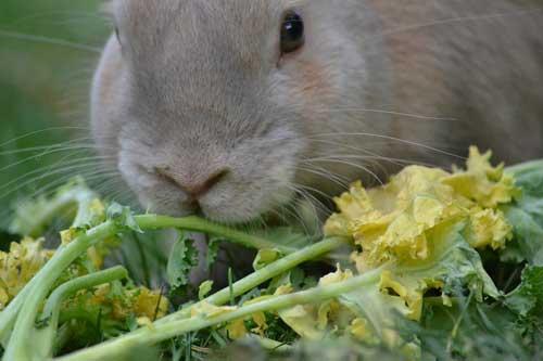 casette per conigli