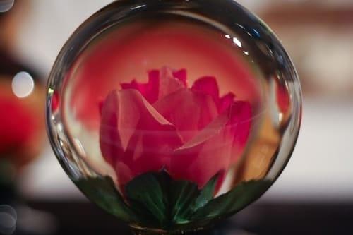 Rosa nel vetro